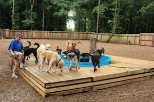 doggiedaycare